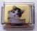 Kissa, kaksivärinen, kultatausta