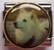 Koira 6, Kiinanpystykorva