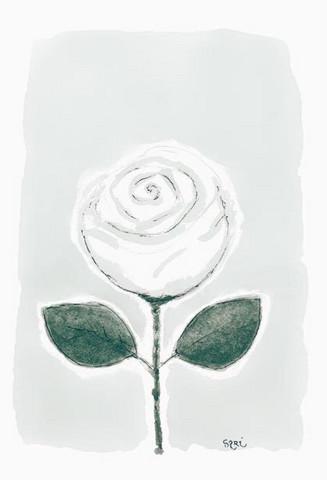 KORTTI, valkoinen ruusu, 2-osainen