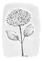 KORTTI, Hortensia mu/valk, 2-osainen