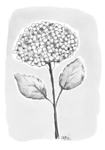 ADRESSI, Hortensia musta/valkoinen