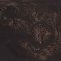 Nidsang - Into The Womb of Dissolving Flames (CD, New)