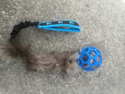 BERRA Ultimate bungee toy with real fur blue ball blue handle