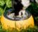 Kiwi Walker CheeseBowl