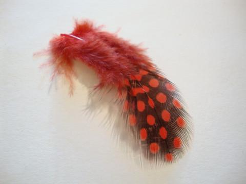 Helmikanan sulka/höyhen värjätty punainen (n.20/pss)