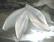 Lucitehelmi Terälehti matta valkoinen 12 x 40 mm