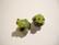 Lamppuhelmi Sammakko musta-vihreä 15 mm