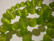 Kissansilmälasihelmi limenvihreä sämikäs pyöreä 10 mm (10 kpl/pss)