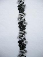 Pitsinauha: Valko/musta 2,5cm