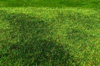 Cut Meadow Early Summer