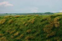 Fallow field, Early summer