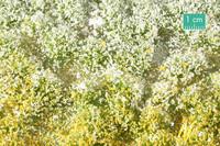 Blossom tufts (Spring) kevät 1/45
