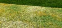 Cut Meadow Late Summer