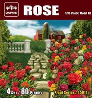 Rose 1/35
