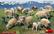 Sheep  1/35