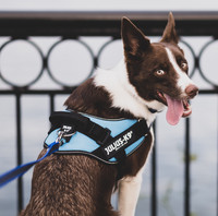 Julius-K9® IDC® Power koiran valjaat, Aqua alkaen 21.90€
