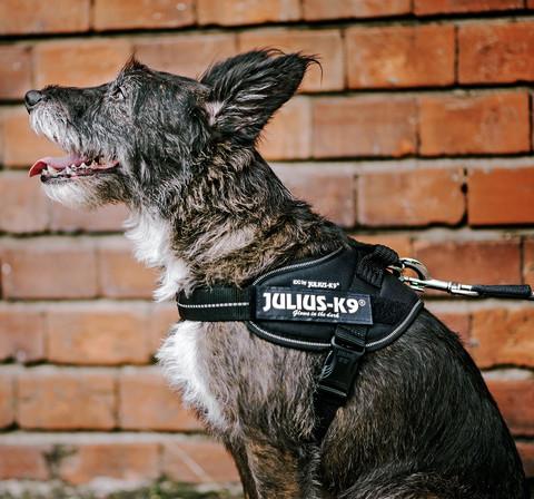 Julius-K9® IDC® Power koiran valjaat, Musta alkaen 21.90€