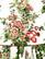 Pelargonia -midihame huivivyön kera 2000-luvulta, 38