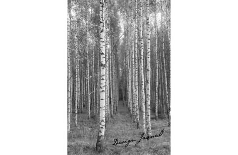 Koivikko - postikortti A6