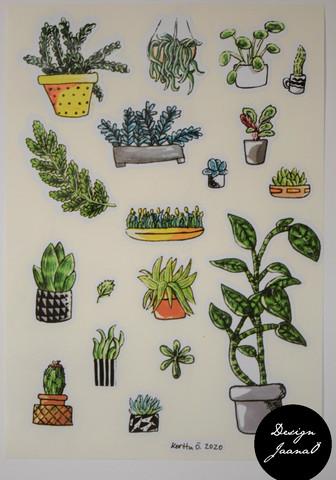 Tarrat - kasvit 2