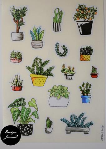 Tarrat - kasvit 3