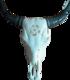 Lehmän kallo , pentagram