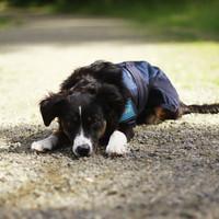 Cool on Track Viilentävä koirantakki