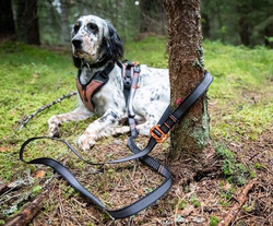 Non-stop dogwear Touring Bungee Adjustable