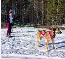 Axaeco Skijoring Line 2 m yhden koiran vetoliina