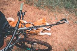 Non-stop dogwear koirapyöräilypaketti