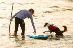 Non-stop dogwear Safe Life Jacket pelastusliivit 2020