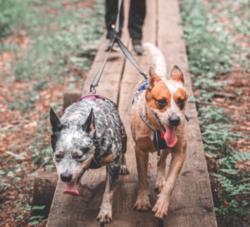 Non-stop dogwear Touring Double