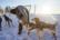 Non-stop dogwear Nansen Nome Harness 5.0