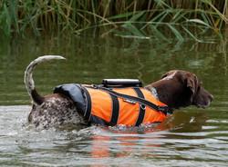 Non-stop dogwear Safe Life Jacket 2.0 pelastusliivit