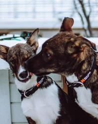 Non-stop dogwear Polypro Adjustable Collar