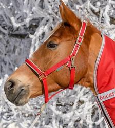 Bucas Dublin -riimu, kirkkaanpunainen, koko pony
