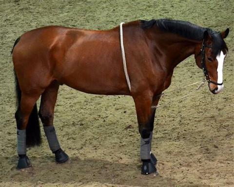 Horse Comfort Easy juoksutusapu