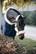 Kentucky Sheepskin Shipping Halter karvariimu, väri natural
