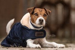 Kentucky Dog Coat, navy