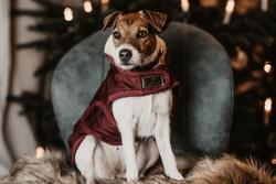 Kentucky Dog Coat, viininpunainen