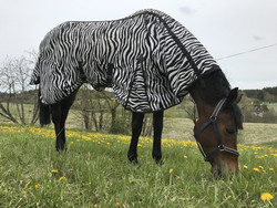 Horse Comfort hyönteisloimi vatsaläpällä