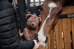 Kentucky Horse Toy Bear