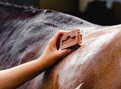 Kevin Bacon hevossaippua