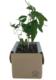Eukalyptuspuu