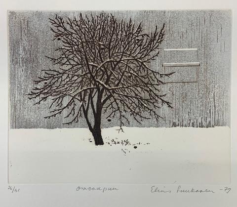 Luukanen  Omenapuu