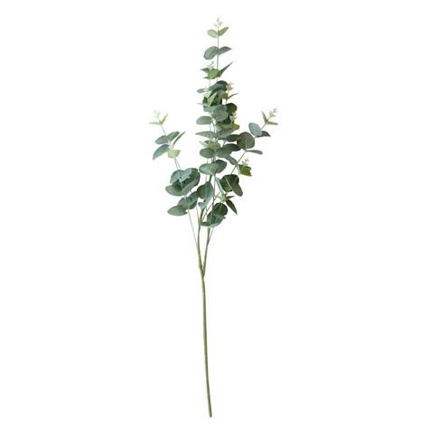 Eukalyptus oksa 80 cm