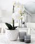 Orkidea ruukussa valkoinen
