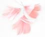 Höyhenkoriste kukka vaaleanpunainen