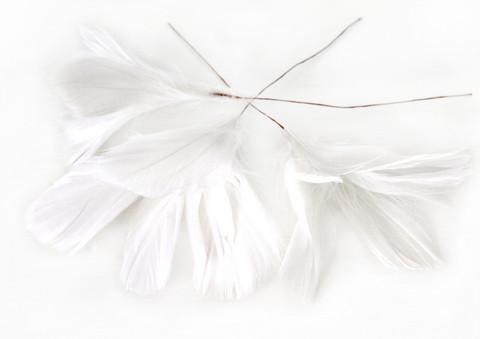 Höyhenkoriste kukka valkoinen