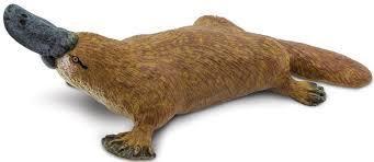 Vesinokkaeläin